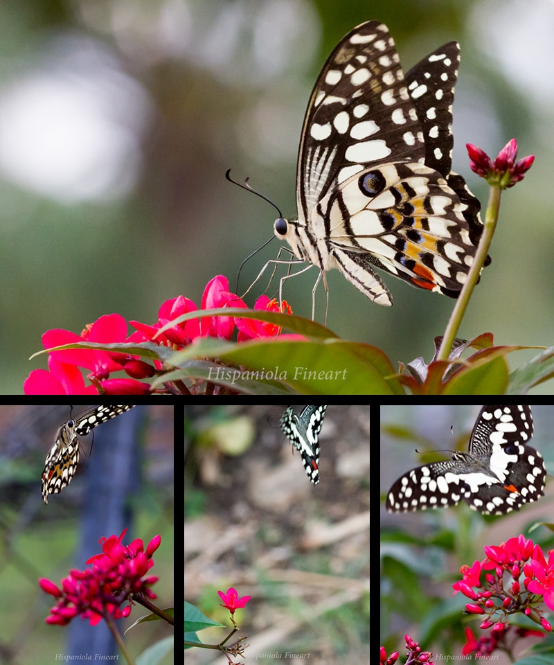 hunting…the butterfly